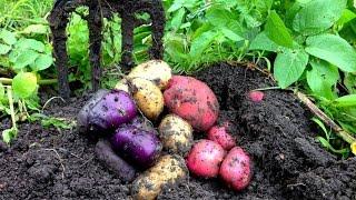 Bountiful Harvest in the Organic Vegetable Garden