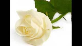 gee haar 'n roos
