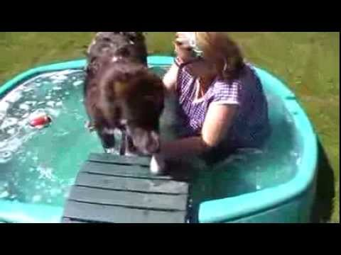 Xxx Mp4 Huge Central Asian Shepherd Pups 1st Bath At Foxfire 3gp Sex