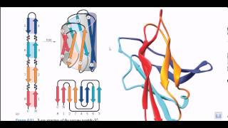 Protein motifs and domains | secondary structure of proteins