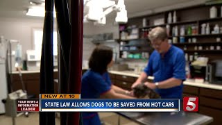 Veterinarians Urge Pet Owners to Take Precautions in Extreme Heat