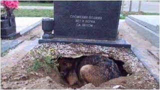 People Said This Dog Was Guarding Her Owner's Grave, But One Rescuer Uncovered A Stunning Secret