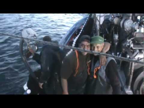 ΨΑΡΕΜΑ ΓΡΙ ΓΡΙ ΜΕ ΚΑΙΝΟΥΡΓΙΑ ΡΟΜΠΟΤ LED Big Catch Fishing lights