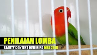 NEWSFLASH : Penilaian Lomba Beauty Contest Love Bird Metro Bird Festival 2018