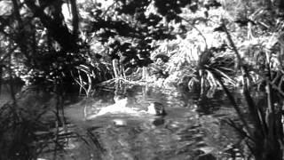 Tarzan 1934 - Jane Nadando Nua (cena cortada no original)