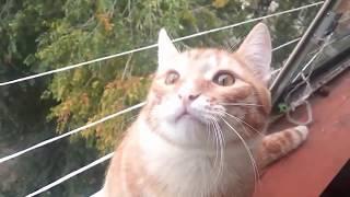 Funny Broken Cats 2015