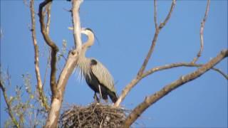 Seven Islands State Birding Park - Kodak, TN