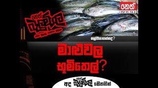 Balumgala 2018-02-26 මාළුවල භුමි තෙල්?