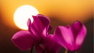 Relaxing Music for Meditation - Soothing Music for Stress Relief, Study, Spa, Massage (Amaya)