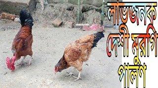 লাভজনক দেশী মুরগি পালন পদ্ধতি । Rearing Local Chicken । Deshi Murgi palon