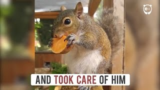 This squirrel fell from a tree and cried for hours until people saved his life