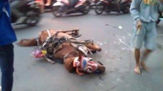 Kasihan Kuda Pingsan / Fainted Horse ( Jalan Kuningan Jakarta )