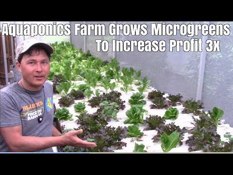 Xxx Mp4 Aquaponics Farm Grows Microgreens To Increase Profit 3x 3gp Sex