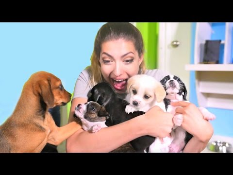 Boyfriend Surprises Girlfriend With A Dozen Puppies!