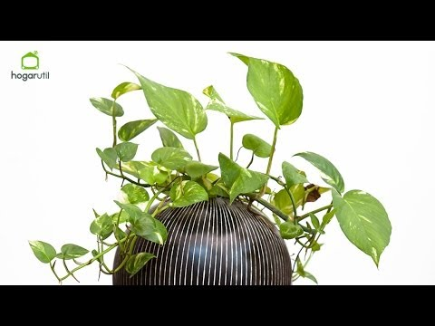 Xxx Mp4 Potos O Photos Planta De Interior 3gp Sex
