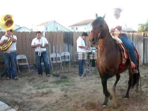 EL SINALOENSE caballo bailador