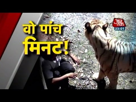 Xxx Mp4 Vardaat White Tiger Mauls Youth In Delhi Zoo PT 1 3gp Sex