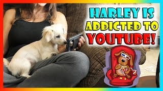 OUR PUPPY IS ADDICTED TO YOUTUBE! | We Are The Davises