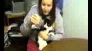 Funny Cats In Water 2013 DidarBD24 Com)
