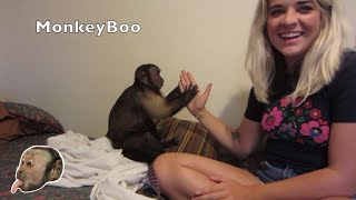 Monkey Plays Patty Cake