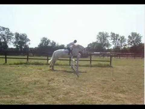 Xxx Mp4 My Horse Flash Xx 3gp Sex