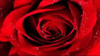 English Quran Chapter Yaseen - Amazing Recitation by Qari Abdul Basit  [FULL]