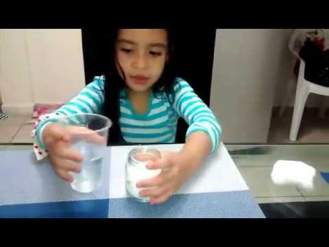 Germinación semilla de frijol