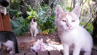 Bakıcı anne kedi ve birbirine acımayan haşin yavru kediler