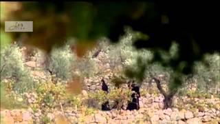 Vie de Saint Charbel  حياة مار شربل - الفيلم الكامل Full movie HD