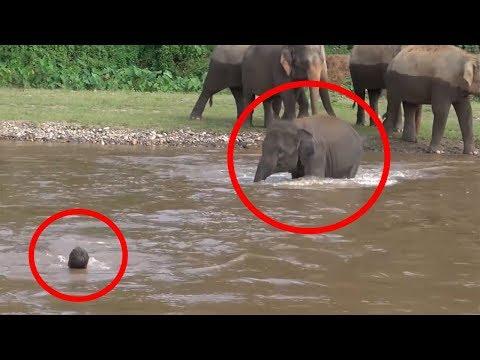 7 Times ANIMALS SAVING HUMANS Caught On Camera FUN2KNOW