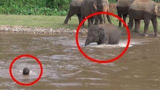 7 Times ANIMALS SAVING HUMANS Caught On Camera | FUN2KNOW!