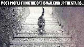 IS THIS CAT WALKING UP OR DOWN?