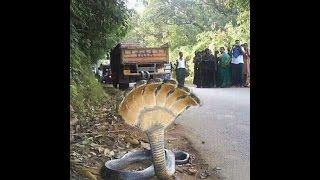 Seven Headed Snake: Real or Fake?