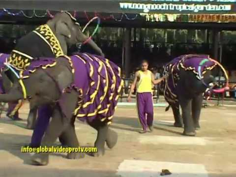 ELEPHANTS GOT TALENT PAINTING etc. PATTAYA THAILAND
