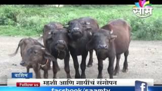 Dileep Soni's dairy farming success story