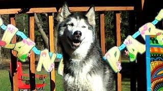 Mishka's BarkBox Video Contest!
