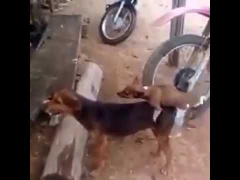 Xxx Mp4 Puppy Sex For Dog Video 3gp Sex