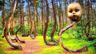 দেখুন আফ্রিকার যে গাছ সারা জঙ্গলে হেটে বেড়ায়-Africa's jungle Tree that walking