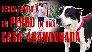 Rescatando Un Perro De Una Casa Abandonada