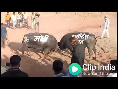 Xxx Mp4 Modi Nhi Chhodunga 2019 Ki Taiyari 3gp Sex
