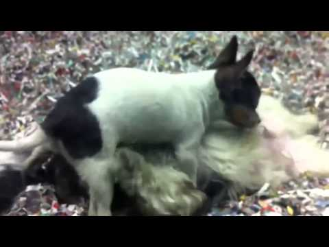Hot Animal Mating Crazy Videos  Funny Video 2014 Part68