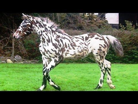 Xxx Mp4 World S RAREST Horse Breeds Ever 3gp Sex