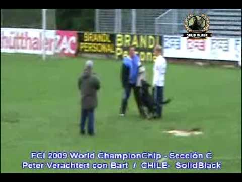 Xxx Mp4 SOLIDBLACK PETER VERACHTERT CON BART C FCI 2009 WORLD CHAMPION CHIP 3gp Sex