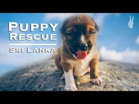 Saving a Puppy in Sri Lanka s Surf Capital Mirissa & Galle Travel Guide