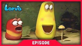 LARVA - MUSHROOM | Cartoon Movie | Cartoons For Children | Larva Cartoon | LARVA Official