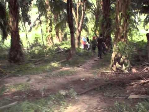 Ekspedisi Memancing di Sungai Triang Dapat udang galah besar