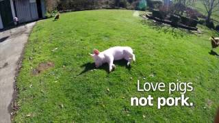 Dot the Pig knows how to enjoy life