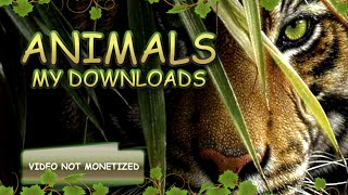 ZT2 Downloads: Animals (links in description)