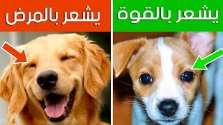 12 علامه خفيه عن الكلاب   كيف تفهم لغة الكلاب ؟؟