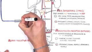 Pharmacology - Antihypertensives